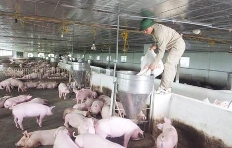Chăn nuôi không kháng sinh, khó đến đâu? - Thực trạng báo động đỏ - Ảnh 1.