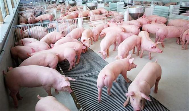 Chăn nuôi không kháng sinh, khó đến đâu? - Thực trạng báo động đỏ - Ảnh 2.