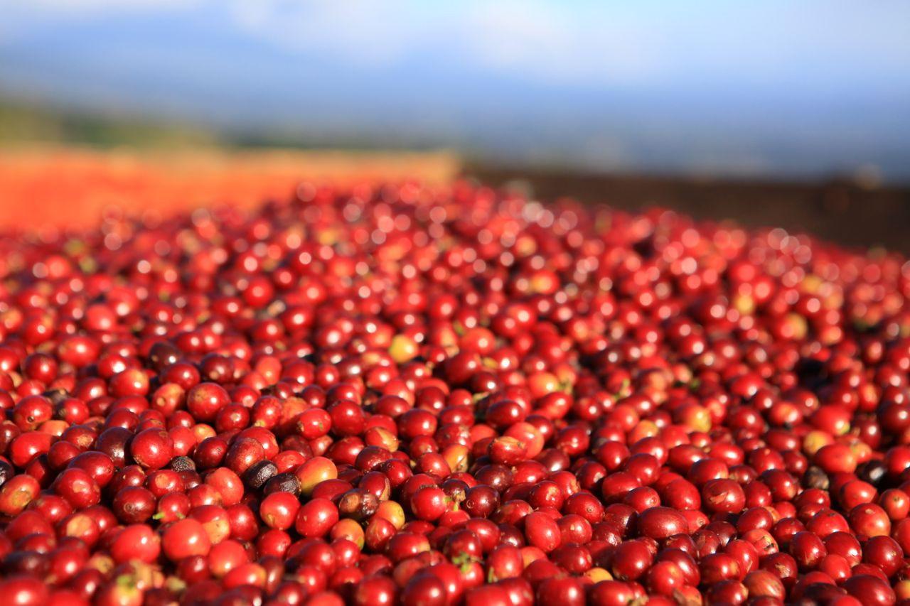Đà giảm xuất khẩu cà phê Việt Nam vẫn chưa dứt - Ảnh 1.