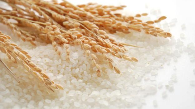 Gạo đặc sản Philippines tìm kiếm cơ hội tại Nhật Bản - Ảnh 1.