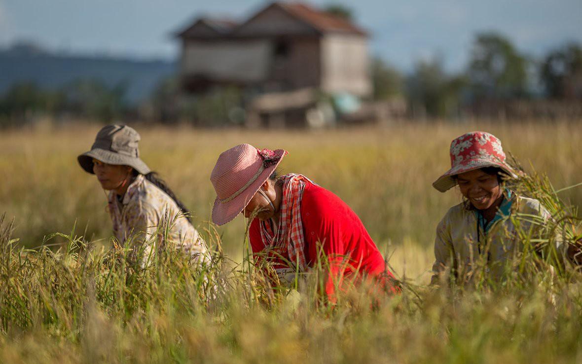 Ứng dụng Blockchain vào trồng lúa tại Campuchia để giúp nông dân xoá đói, giảm ngheo - Ảnh 1.