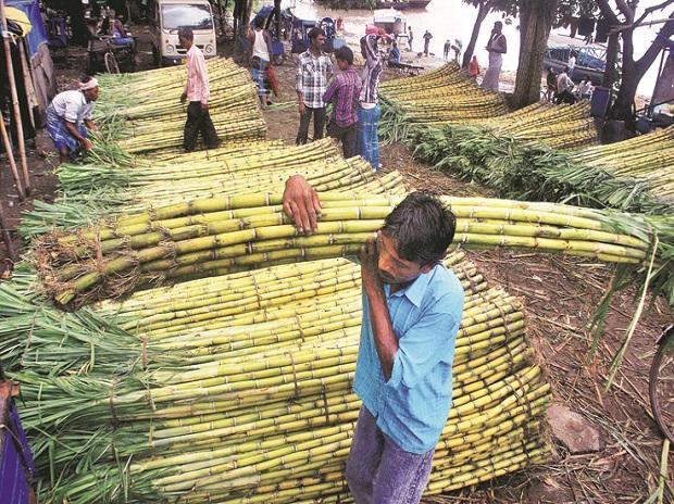 Cổ phiếu ngành đường Ấn Độ chạm mức cao nhất 52 tuần - Ảnh 1.