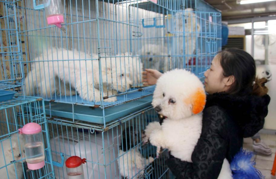 Bùng nổ thị trường dịch vụ thú cưng xa xỉ tại Trung Quốc - Ảnh 1.