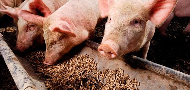 Nhu cầu thức ăn chăn nuôi gia súc tại Việt Nam dự báo giảm vì dịch tả heo châu Phi - Ảnh 1.