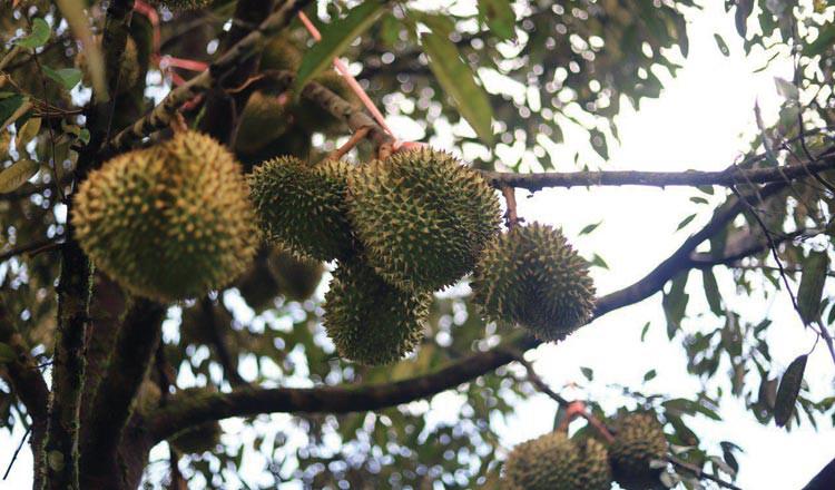 Kampot trở thành tỉnh kiểu mẫu cho các mặt hàng đặc sản địa phương Campuchia - Ảnh 1.