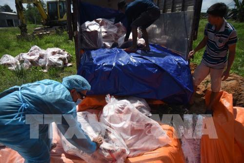 Tiêu huỷ 4 tấn thịt lợn nhiễm tả lợn châu Phi giấu trong kho lạnh - Ảnh 2.
