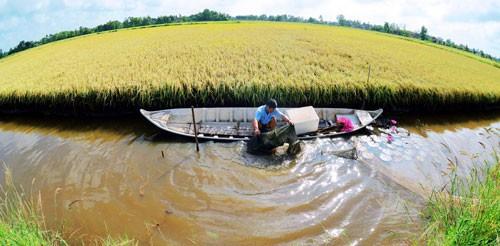 Triển vọng từ mô hình tôm sinh thái - lúa an toàn - Ảnh 1.