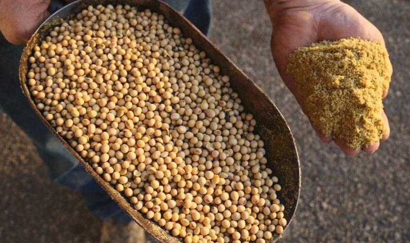Người trồng đậu nành Brazil dễ dàng nuốt trọn lợi ích khổng lồ từ chiến tranh thương mại? - Ảnh 1.