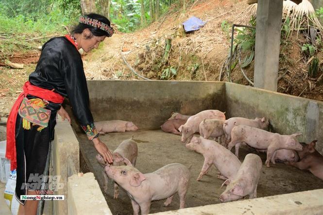 Mua lợn qua mạng, dịch tràn lan - Ảnh 3.