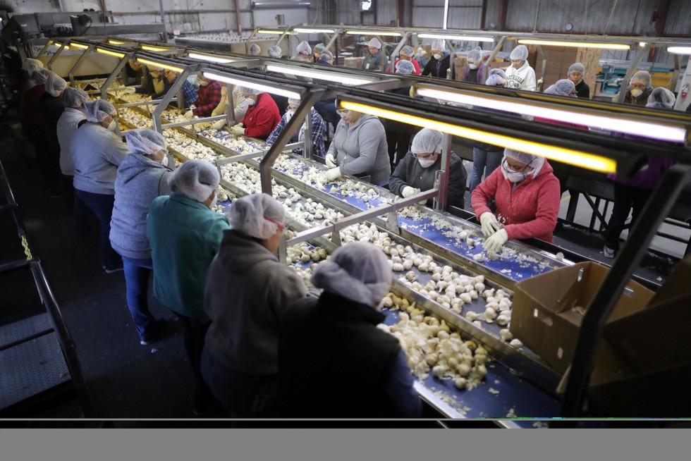 Dân trồng tỏi ở Mỹ thở phào mong thương chiến - Ảnh 7.