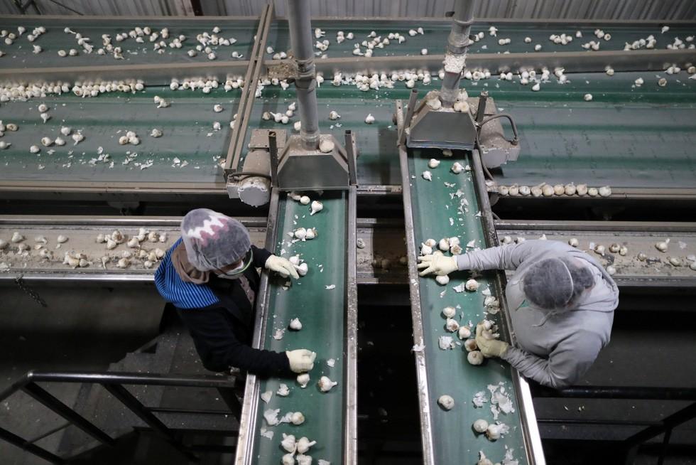 Dân trồng tỏi ở Mỹ thở phào mong thương chiến - Ảnh 8.