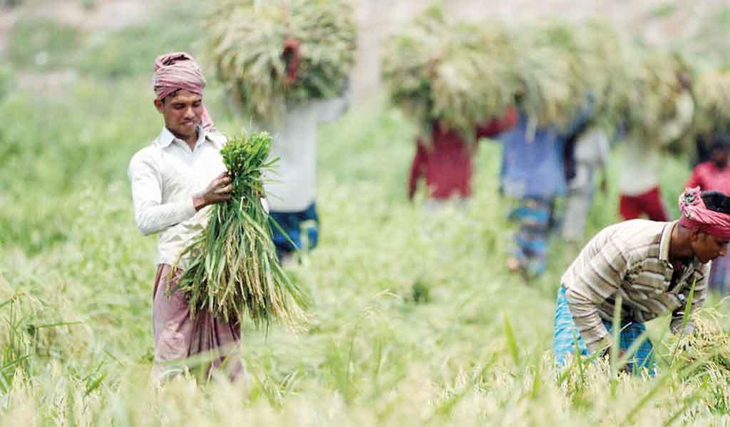 Ủy ban Thường vụ Quốc hội Bangladesh: Mua thêm lúa, ngừng nhập khẩu gạo - Ảnh 1.