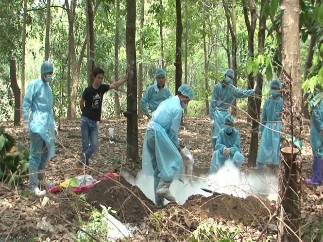 Đã phát hiện 14 ổ dịch tả lợn Châu Phi ở Bình Phước - Ảnh 1.