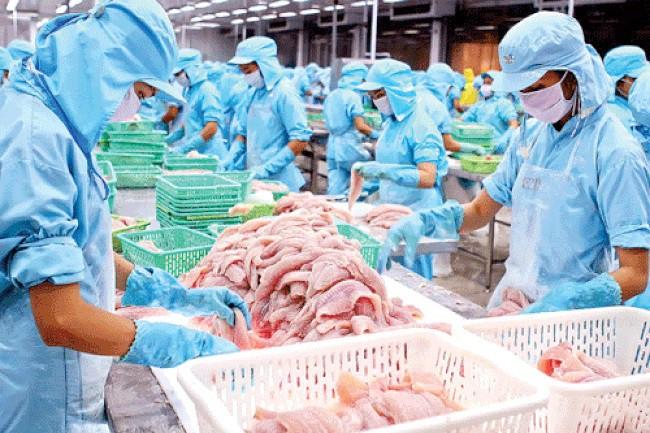 [Phần 1] Mỹ nâng thuế đối với cá rô phi Trung Quốc, cá tra Việt Nam có thực sự hưởng lợi? - Ảnh 1.