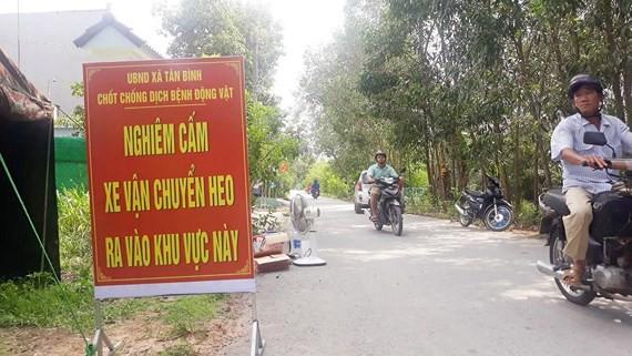 Đồng Nai đã tiêu hủy hơn 5.000 con heo mắc dịch tả heo châu Phi - Ảnh 1.
