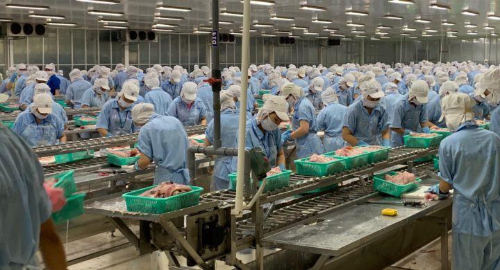 Trung Quốc - thị trường tiềm năng cho philê cá tra Việt Nam - Ảnh 1.