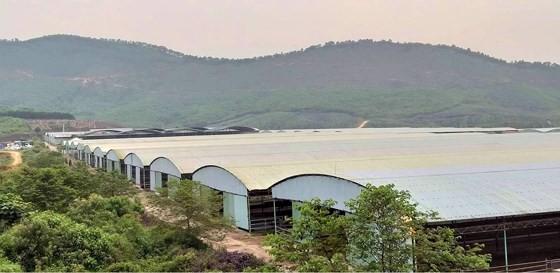 Rà soát tổng thể dự án chăn nuôi bò Bình Hà - Ảnh 2.