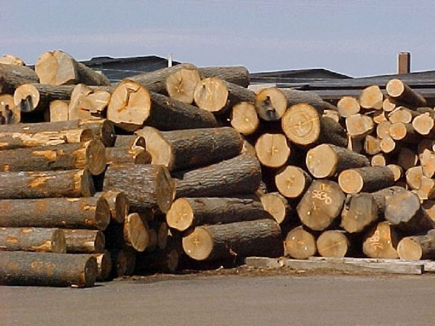 Từ 1/6, VPA/FLEGT có hiệu lực, gỗ bất hợp pháp sẽ bị loại bỏ khỏi chuỗi cung ứng - Ảnh 2.