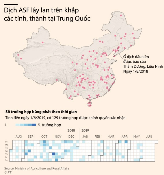 Giá heo giống Trung Quốc tăng 77% khi dịch ASF không có dấu hiệu chấm dứt - Ảnh 1.