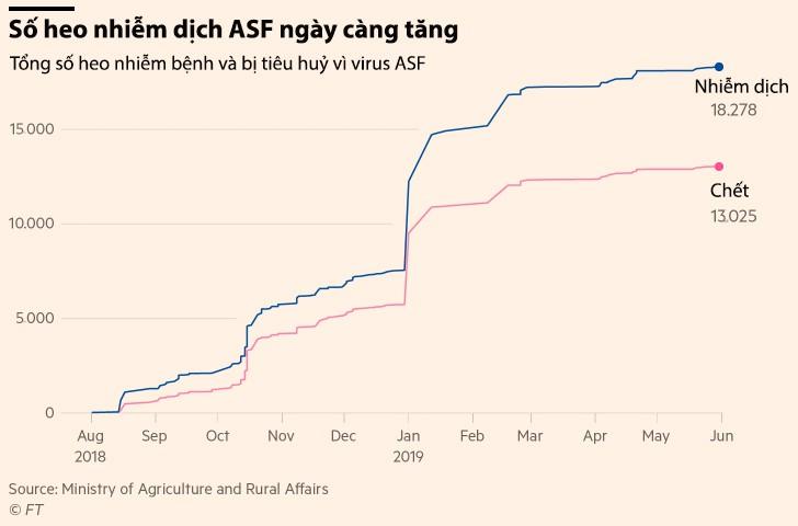 Giá heo giống Trung Quốc tăng 77% khi dịch ASF không có dấu hiệu chấm dứt - Ảnh 2.