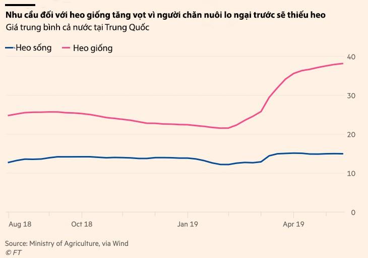 Giá heo giống Trung Quốc tăng 77% khi dịch ASF không có dấu hiệu chấm dứt - Ảnh 3.