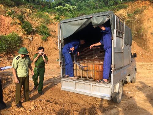 Phát hiện 400 kg cá tầm nhập lậu từ Trung Quốc - Ảnh 1.