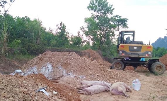 Quảng Bình: Phát hiện ổ dịch tả lợn Châu Phi đầu tiên - Ảnh 2.