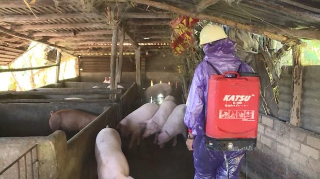 Xuất hiện ổ dịch tả lợn châu Phi ở Phú Yên - Ảnh 1.