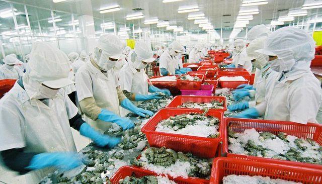 Nghịch lý: Xuất khẩu tôm tốt nhất thế giới nhưng thi chứng chỉ thì 'rớt ngay' - Ảnh 1.