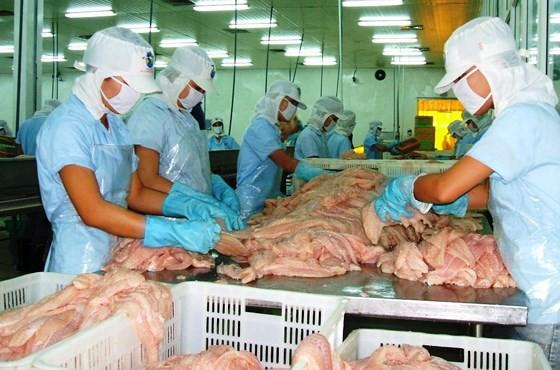Cá tra giảm mạnh, người nuôi ở ĐBSCL lỗ nặng - Ảnh 2.