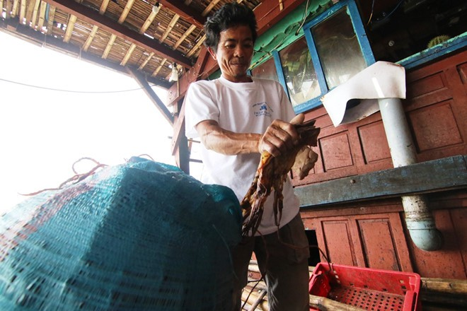 Gần 1.000 tấn mực khô ứ đọng do Trung Quốc ngừng mua đã được 'giải phóng' - Ảnh 2.