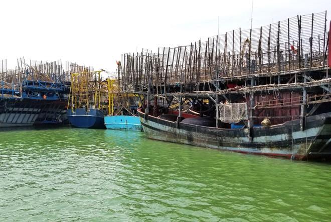 Gần 1.000 tấn mực khô ứ đọng do Trung Quốc ngừng mua đã được 'giải phóng' - Ảnh 3.
