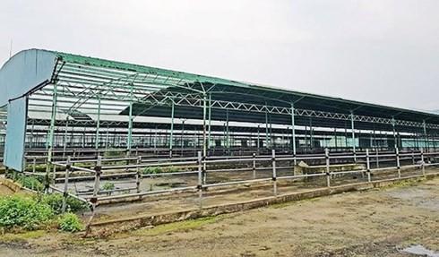 Thông tin mới dự án nuôi bò 4.500 tỉ phá sản liên quan ông Trần Bắc Hà - Ảnh 1.