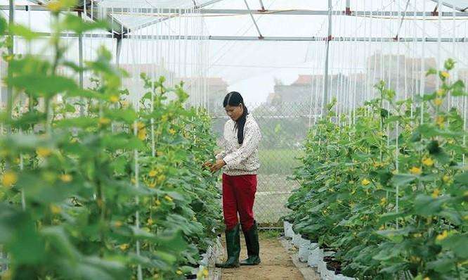 'Hãy coi nông dân là đối tác quan trọng trong mô hình khởi nghiệp của chính mình' - Ảnh 1.