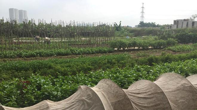 Khách hàng 'vây' trụ sở đòi gần 250 tỉ đã mua đất 'dự án ma' ở Hà Nội - Ảnh 2.