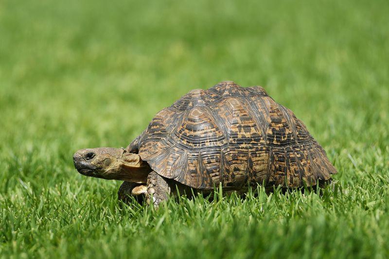 Thương chiến Mỹ - Trung: Cuộc đua thỏ và rùa thời hiện đại? - Ảnh 1.