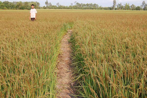 Bộ tiêu chuẩn cho nông nghiệp hữu cơ - Ảnh 1.