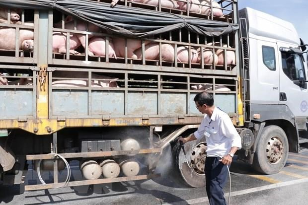 Vận chuyển lợn từ Nam ra Bắc tăng mạnh do thiếu nguồn cung - Ảnh 1.
