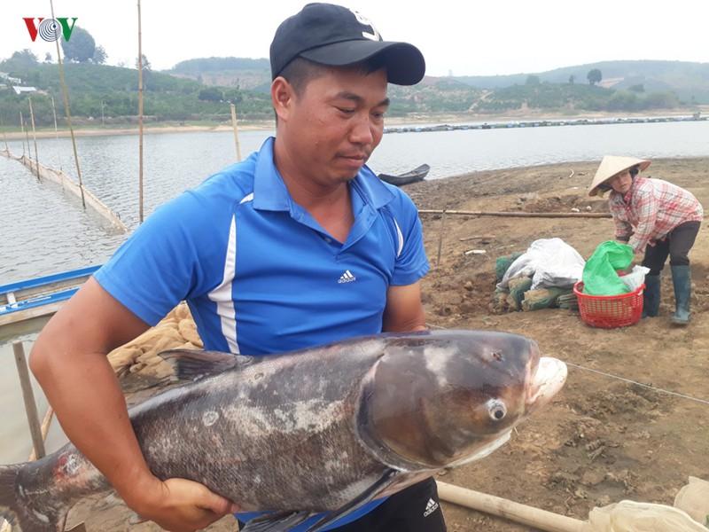 Thu nhập 3 tỷ đồng/năm nhờ nuôi cá trên vùng đất ... cà phê - Ảnh 1.