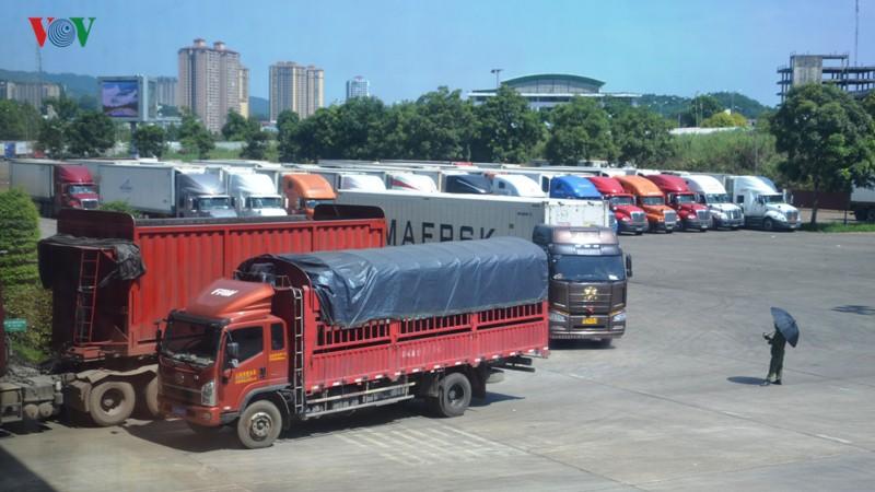 Thực hư hàng trăm container thanh long bị Trung Quốc cấm cửa? - Ảnh 1.