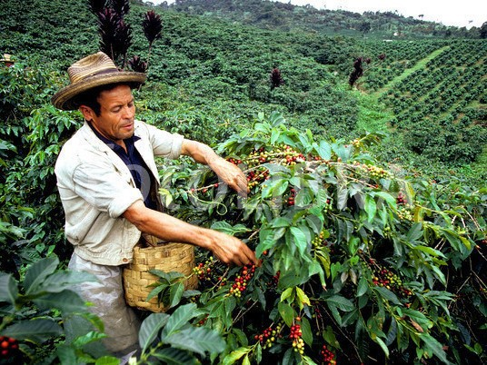 colombia-coffee-picker-exports