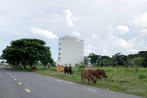 Chuyện lạ ở TP HCM: Nơi giá đất 300 triệu đồng/m2, biệt thự xây dở không người ở - Ảnh 6.