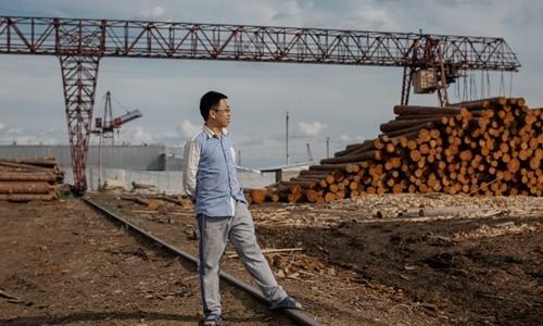Những cánh rừng Nga oằn mình trước cơn khát gỗ của Trung Quốc - Ảnh 1.