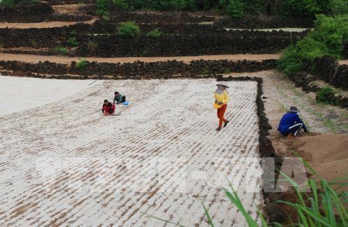 Giá đất nông nghiệp ở Lý Sơn bị thổi lên quá cao - Ảnh 1.