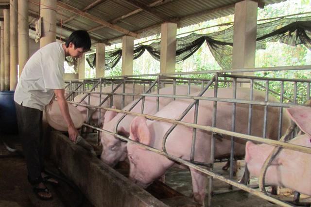 Trung Quốc quyết cắt nguồn Mỹ, sang Việt Nam lùng mua gom hàng - Ảnh 2.