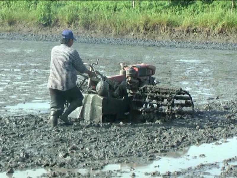 Mở rộng diện tích sản xuất lúa trên đất nuôi tôm - Ảnh 1.