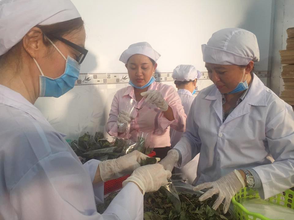 Cô gái An Giang bỏ việc ngân hàng để khởi nghiệp từ cây dược liệu - Ảnh 2.