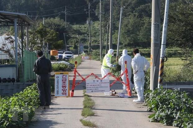 Hàn Quốc dỡ lệnh cấm di chuyển đối với các trang trại heo - Ảnh 1.