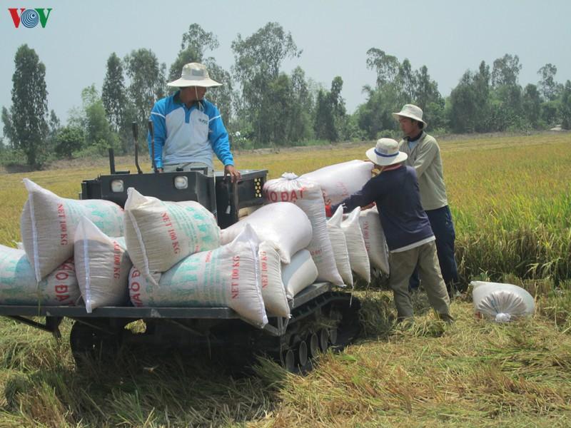 Tìm bước đột phá công nghệ nhằm tăng hiệu quả sản xuất, tiêu thụ lúa gạo - Ảnh 1.