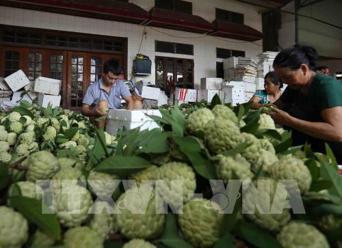 Nông sản Việt nhanh chóng thích ứng với thị trường chính ngạch - Ảnh 2.